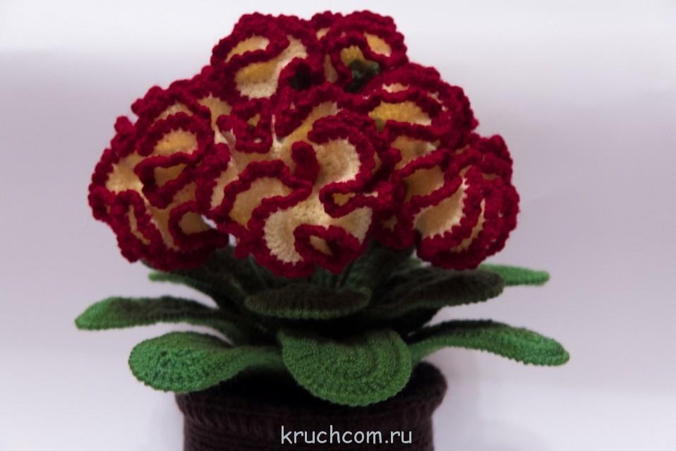 Цветок Целозия крючком